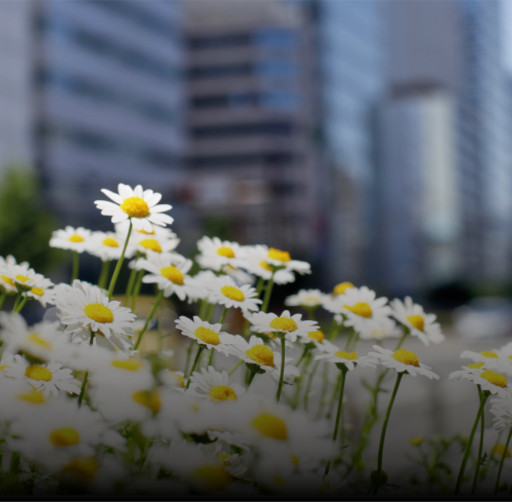 field of flowers against an urban jungle backdrop