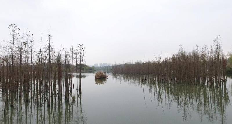 Urban Wetlands in Wuhan China